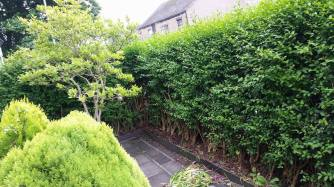 hedge trimming spennymoor