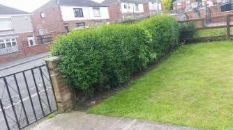 hedge trimming west cornforth
