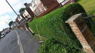 hedge trimming west cornforth2