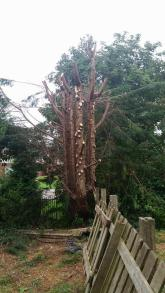 conifer-tree-removal-copy