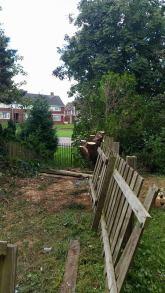 tree-removal-stockton-copy