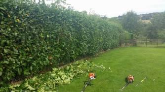hedge-cutting-barnard-castle
