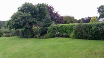 hedge-cutting-barnard-castle2