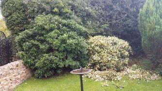 hedgetrimmingcotherstone2