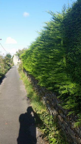 hedgetrimmingcotherstone4
