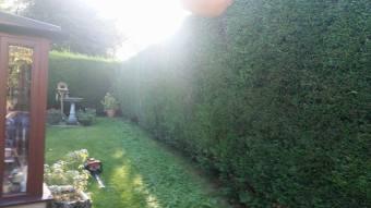 hedgetrimmingcotherstone5